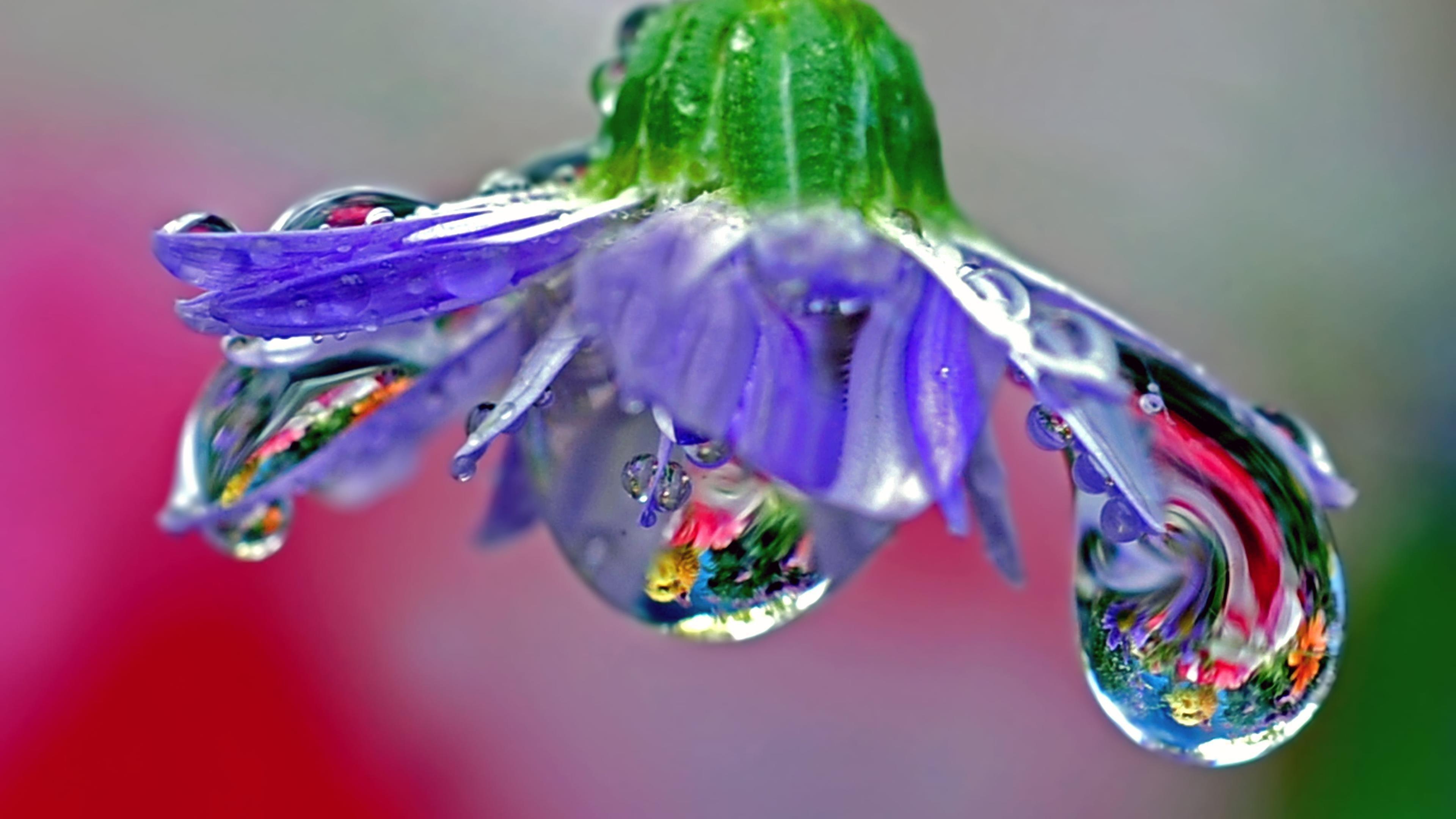 Макрос фиолетового цветка с каплями воды выдувное стекло обои скачать