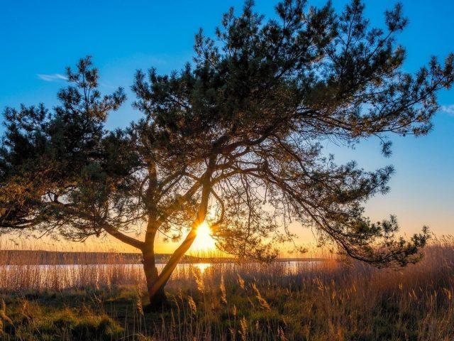 Дерево рядом с озером с солнечным светом природа