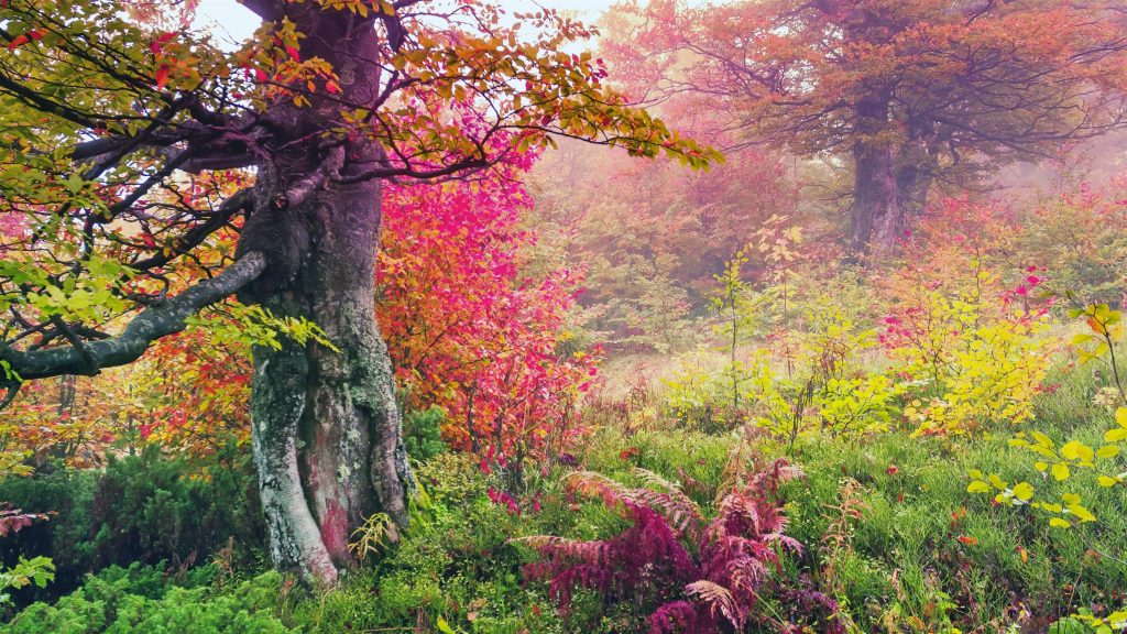 Красивый ранний утренний лесной пейзаж вид на природу обои скачать