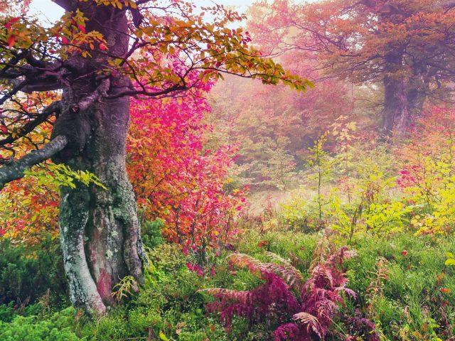 Красивый ранний утренний лесной пейзаж вид на природу