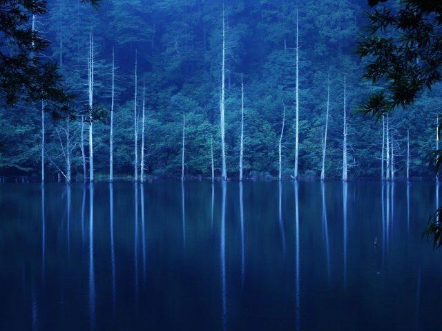 Зеленые деревья покрыли лес на склоне озера с туманом в ночное время природа