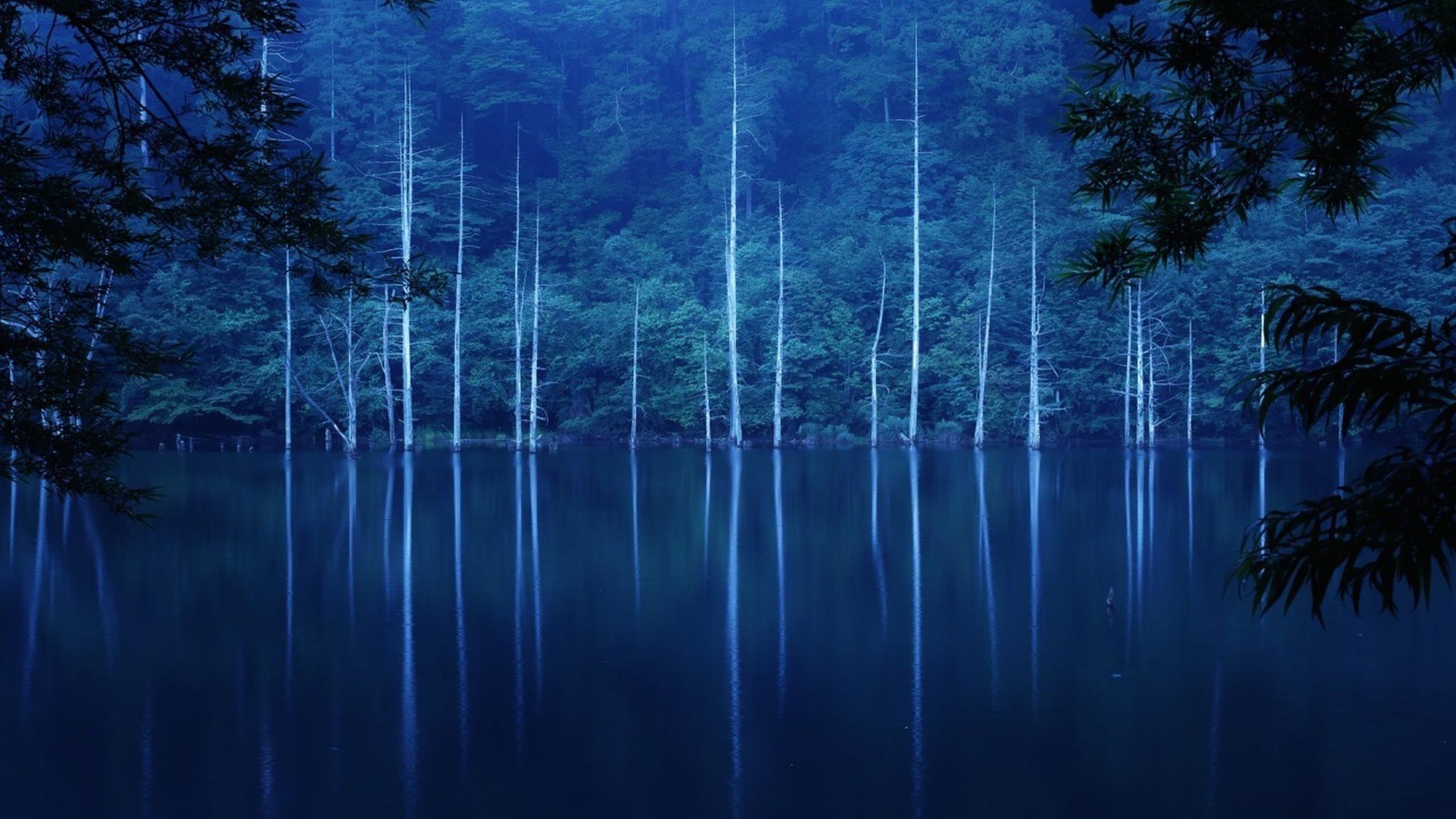 Зеленые деревья покрыли лес на склоне озера с туманом в ночное время природа обои скачать