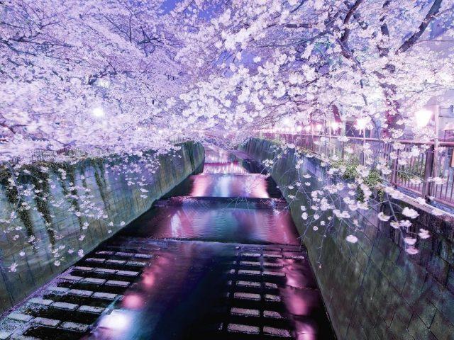 Мост украшен цветущими цветами природы