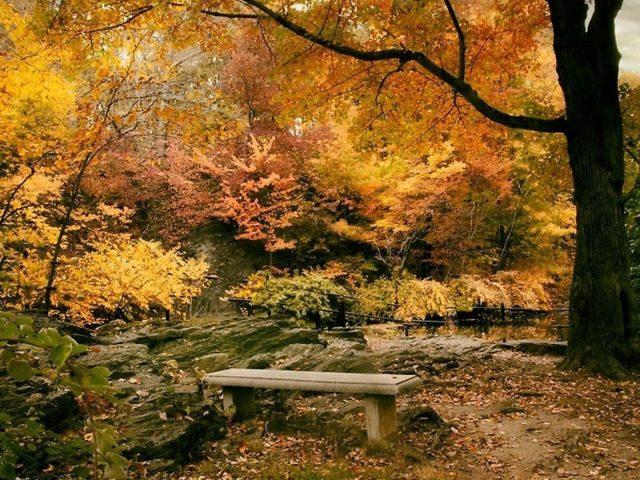 Осенняя листва деревья в лесу с водорослями покрытые скальной природой