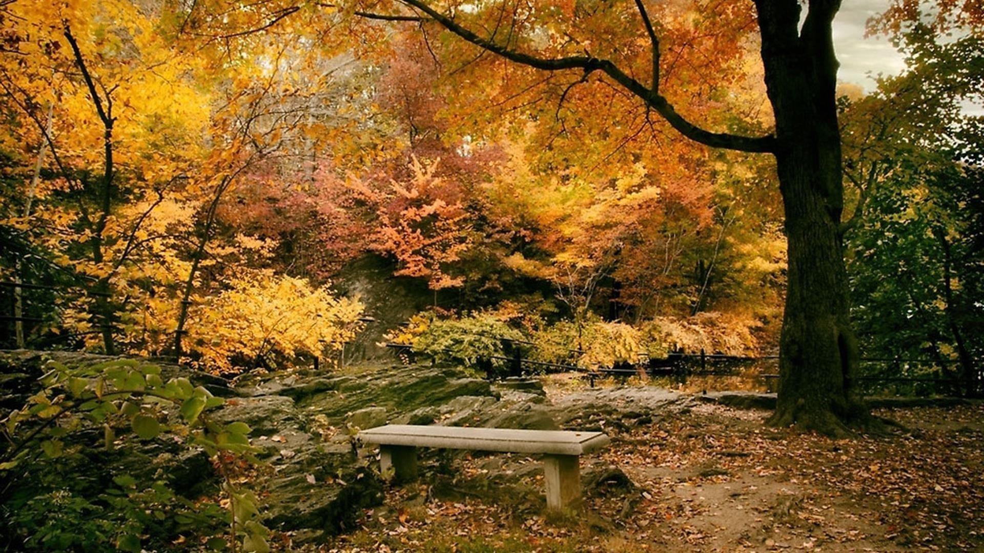Осенняя листва деревья в лесу с водорослями покрытые скальной природой обои скачать