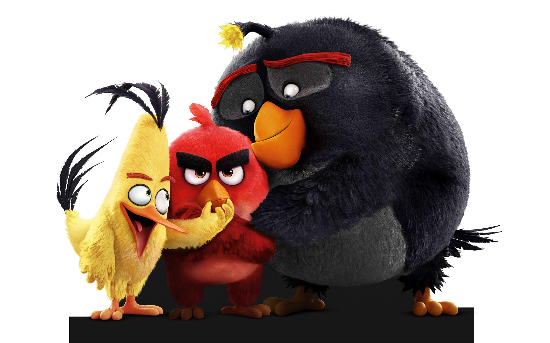 Злые птицы. обои скачать