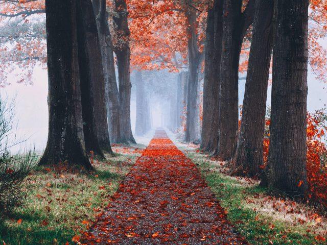 Осенний туманный лес