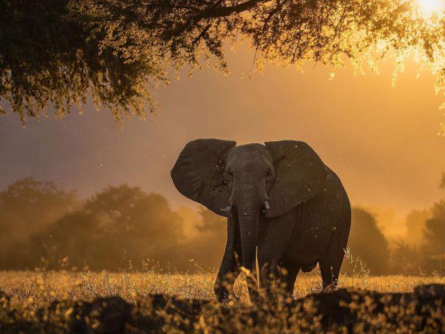Слон лес солнечные лучи утренние животные