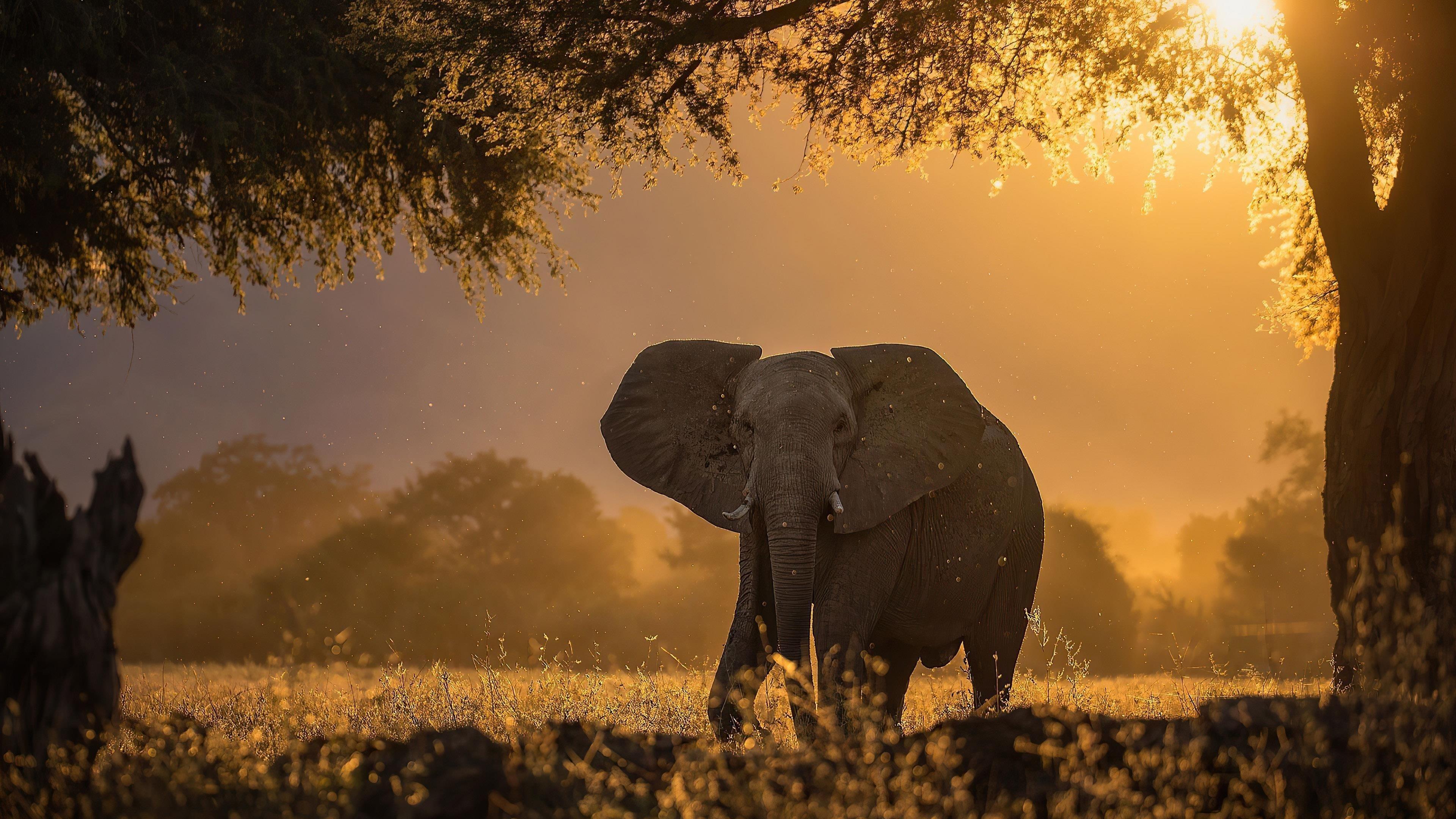 Слон лес солнечные лучи утренние животные обои скачать