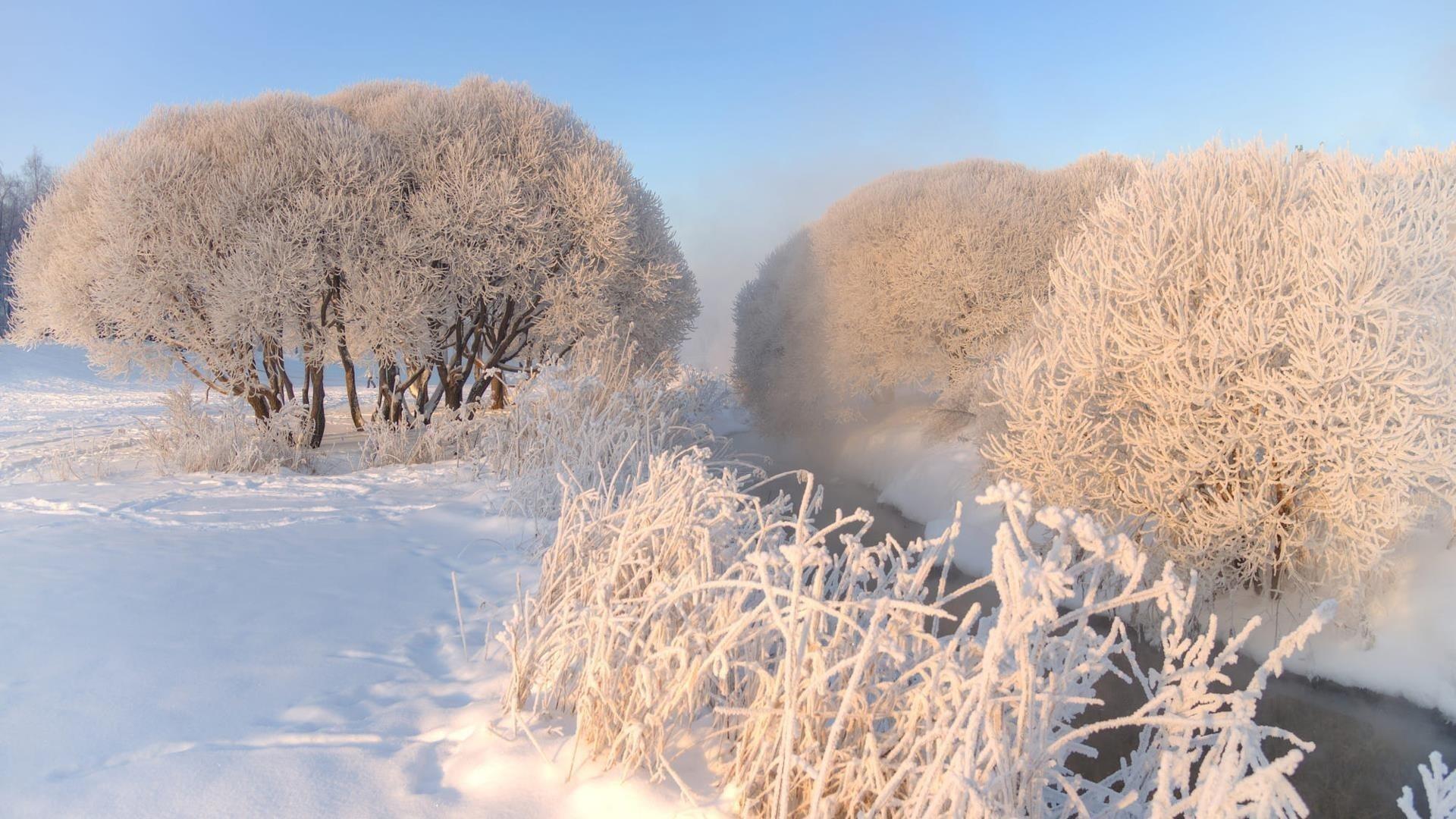 Река между снежным полем с деревьями во время зимней природы обои скачать