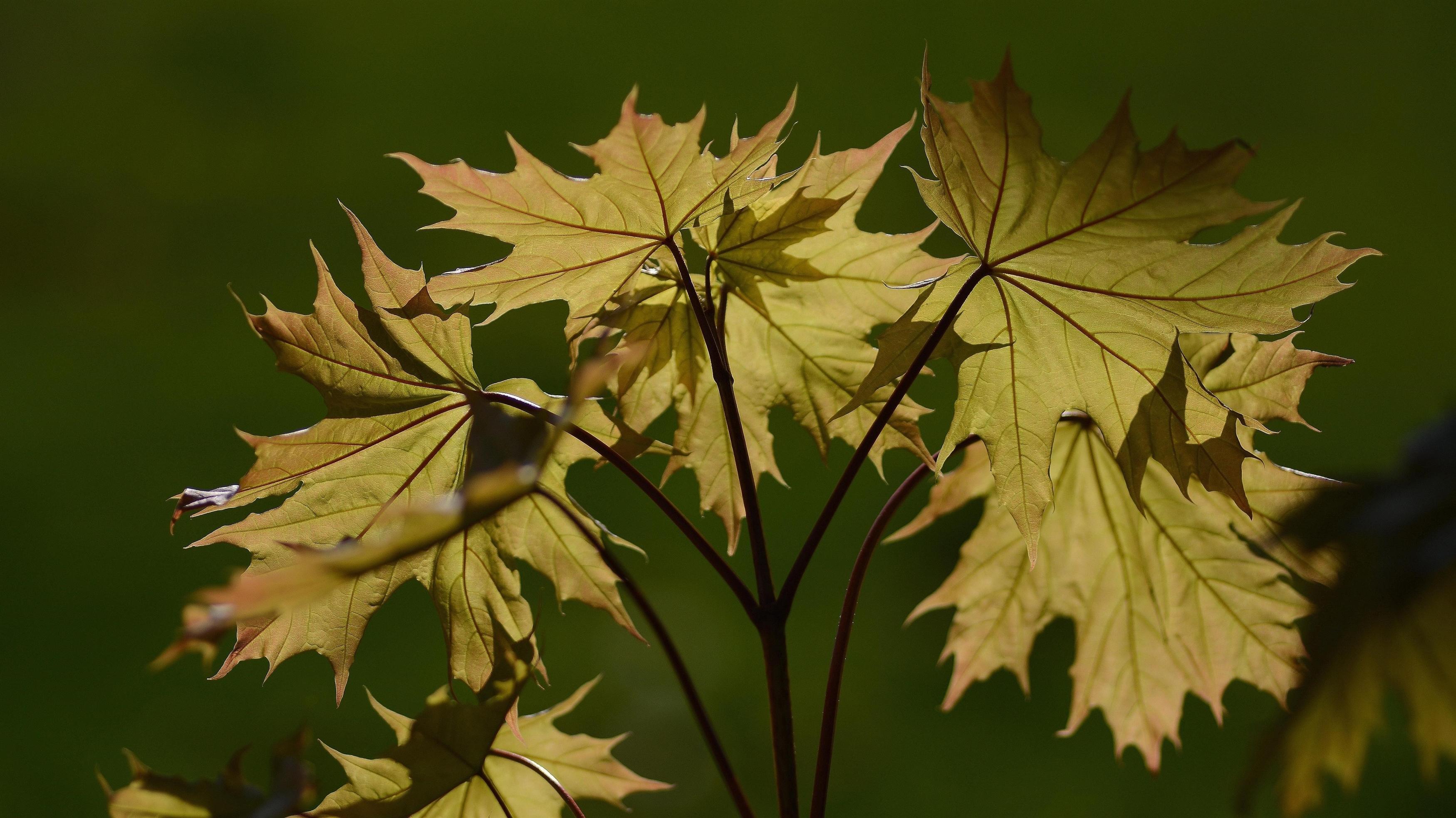 Зеленые листья с зеленым фоном природа обои скачать