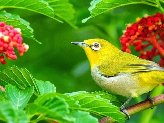 Желто-зеленая птица на зеленых листьях растения ветви птицы