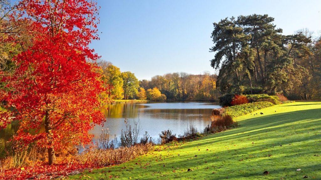 Озеро в окружении осенних листьев деревьев природы обои скачать