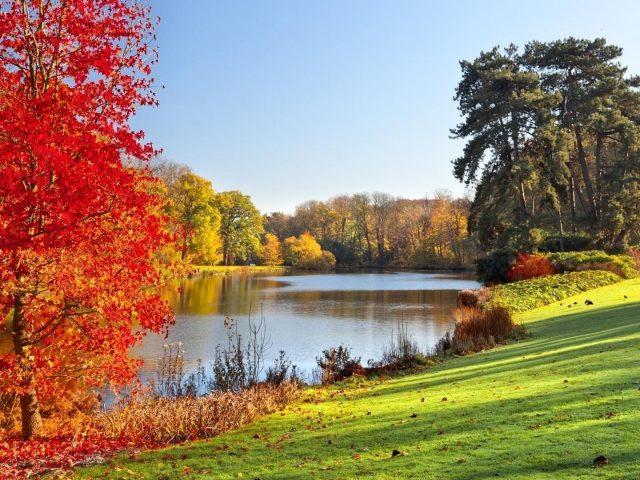 Озеро в окружении осенних листьев деревьев природы