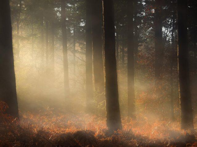 Туман покрыл лес с сухими листьями природу