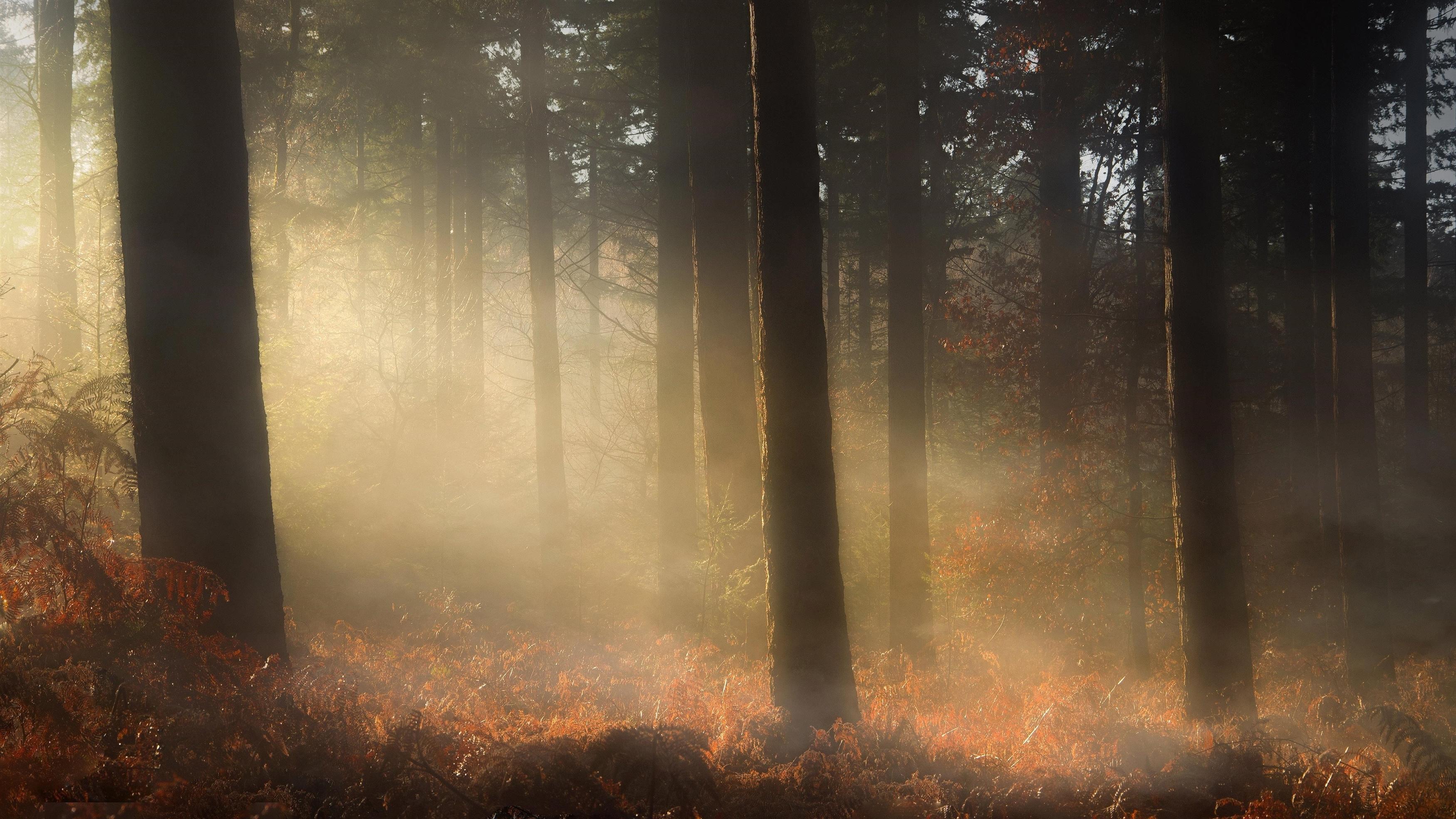 Туман покрыл лес с сухими листьями природу обои скачать