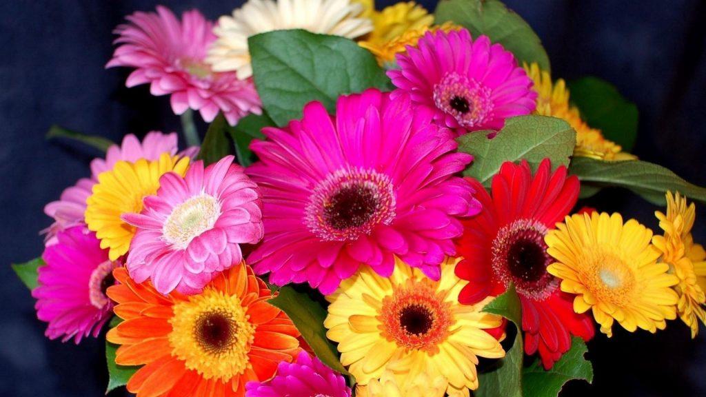 Гербера цветочный букет яркие красочные цветочные цветы обои скачать