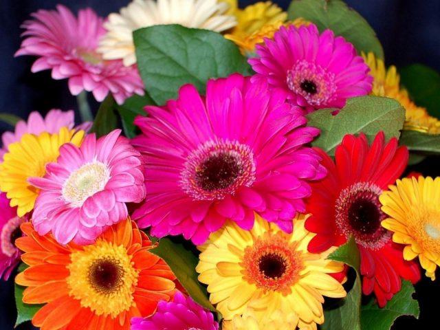 Гербера цветочный букет яркие красочные цветочные цветы