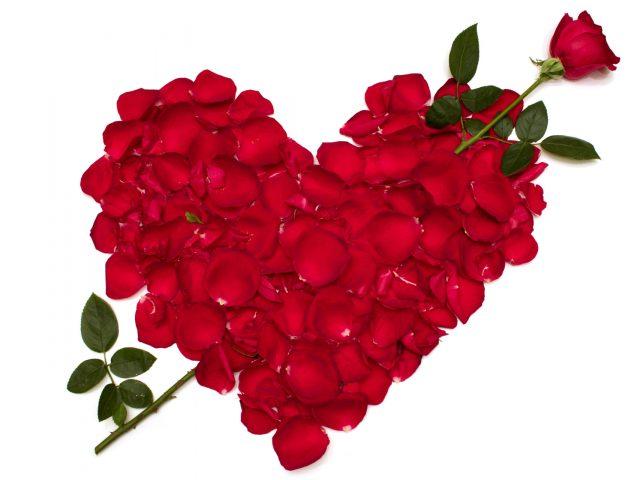 Розы,  цветы,  цветок,  красная