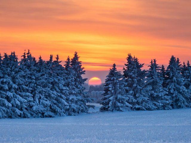 Заснеженные сосны во время восхода солнца природа
