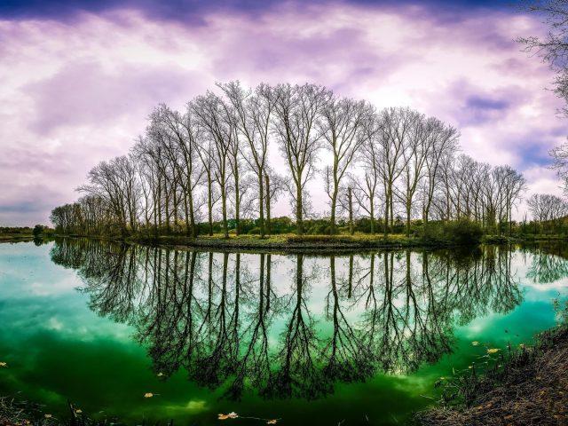 Высокие деревья с отражением на реке под фиолетовым небом природа