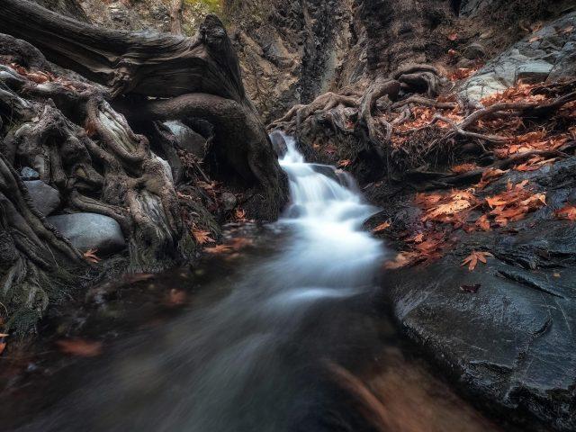 Водопад, проходящий через деревья в темном лесу в дневное время природа