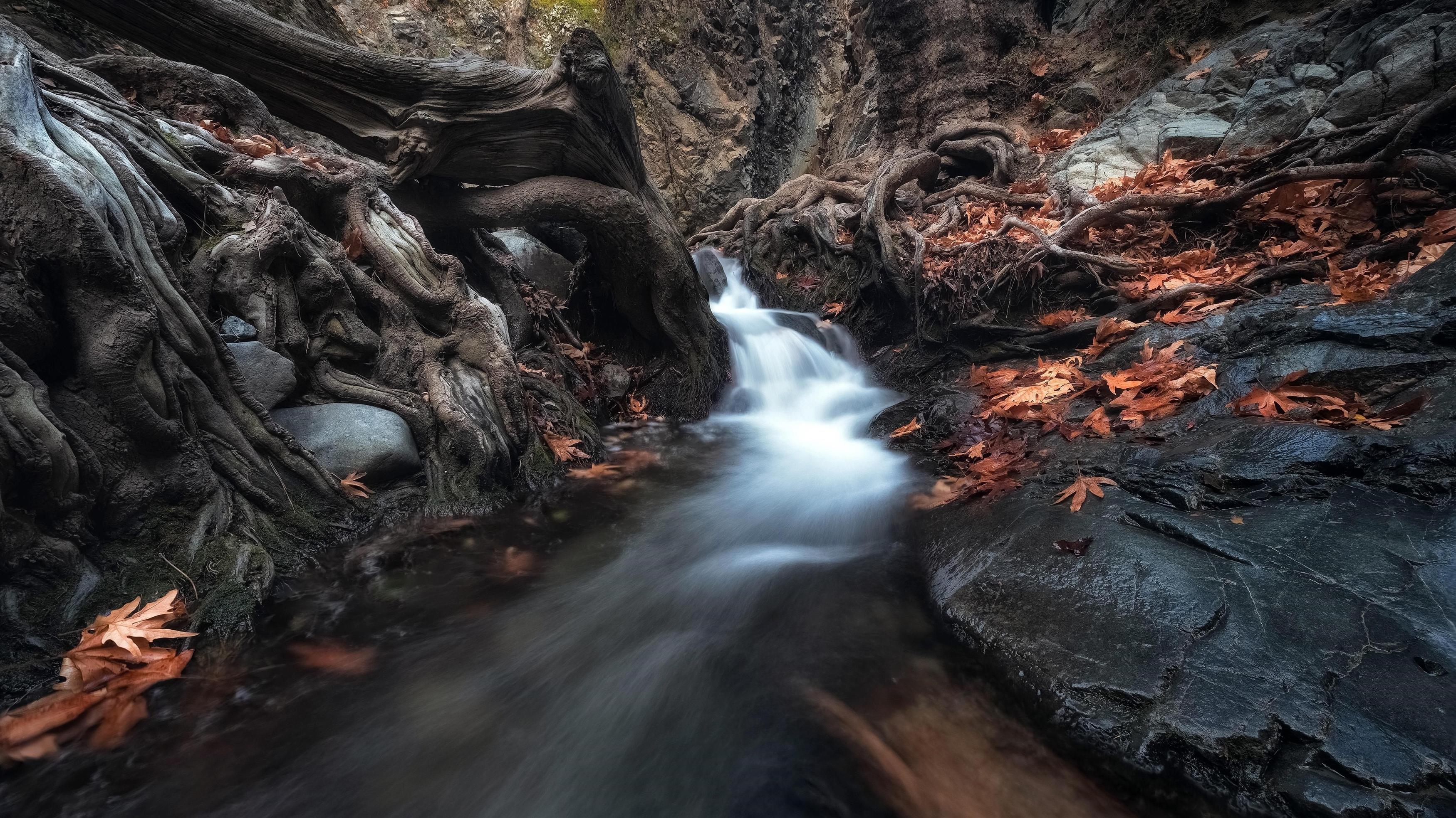 Водопад, проходящий через деревья в темном лесу в дневное время природа обои скачать