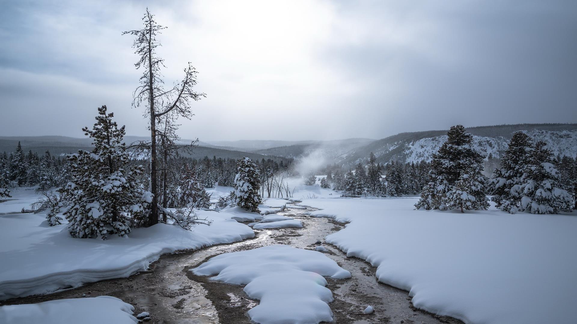 Заснеженное поле с деревьями под белым небом зима обои скачать