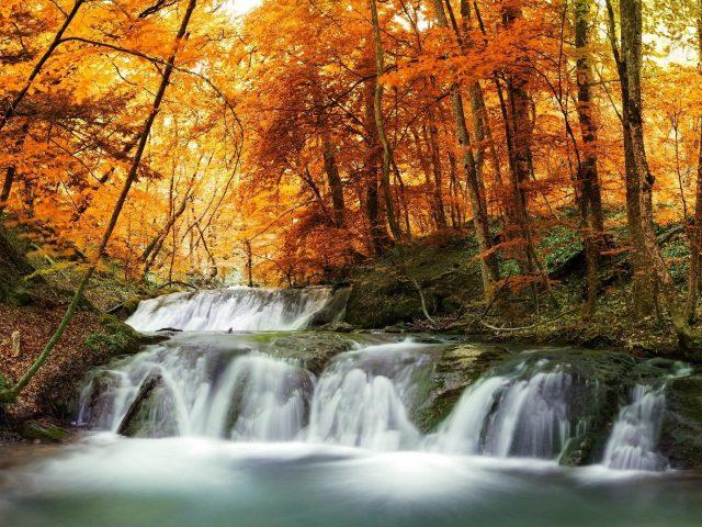 Водопады струятся по покрытым водорослями скалам между желтыми весенними листьями осенних деревьев лесная природа