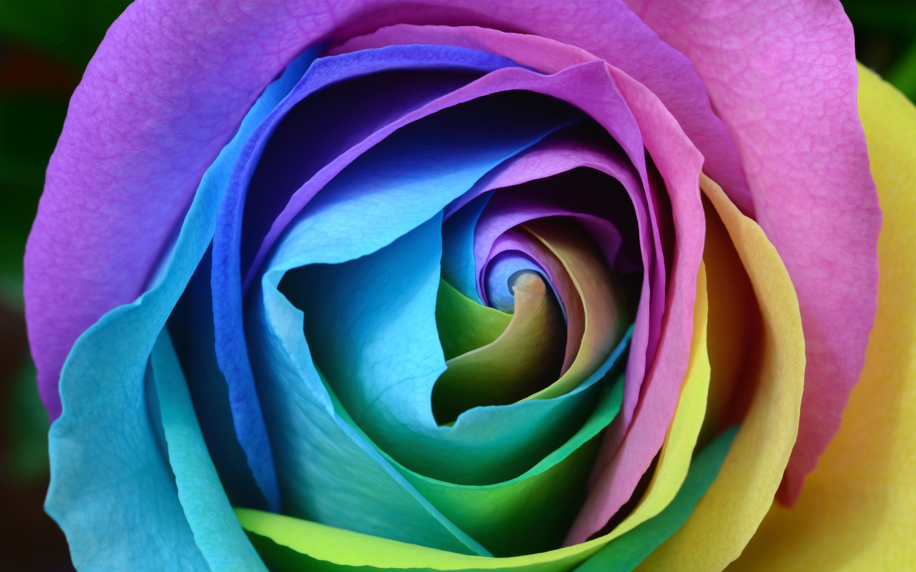 Красочные розы обои скачать