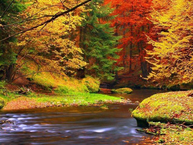 Река между красочными осенними листьями лесных деревьев в дневное время природа