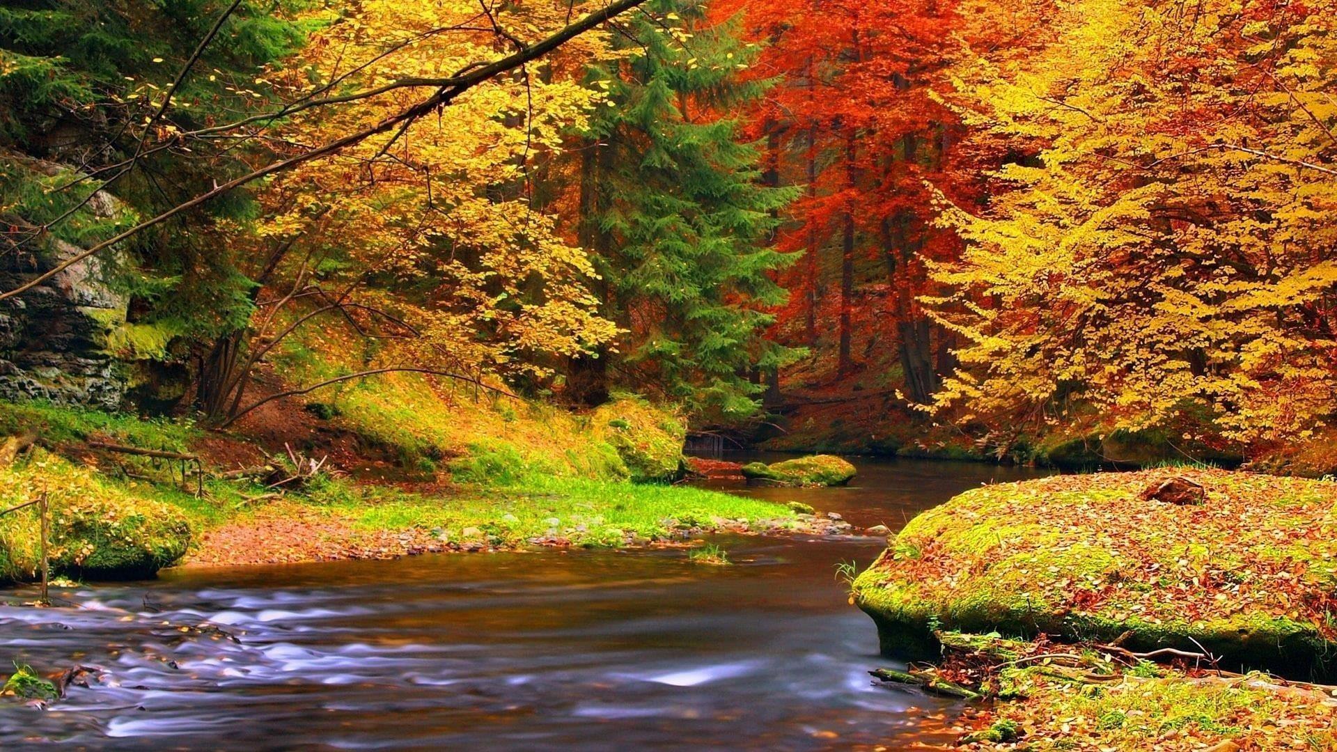 Река между красочными осенними листьями лесных деревьев в дневное время природа обои скачать