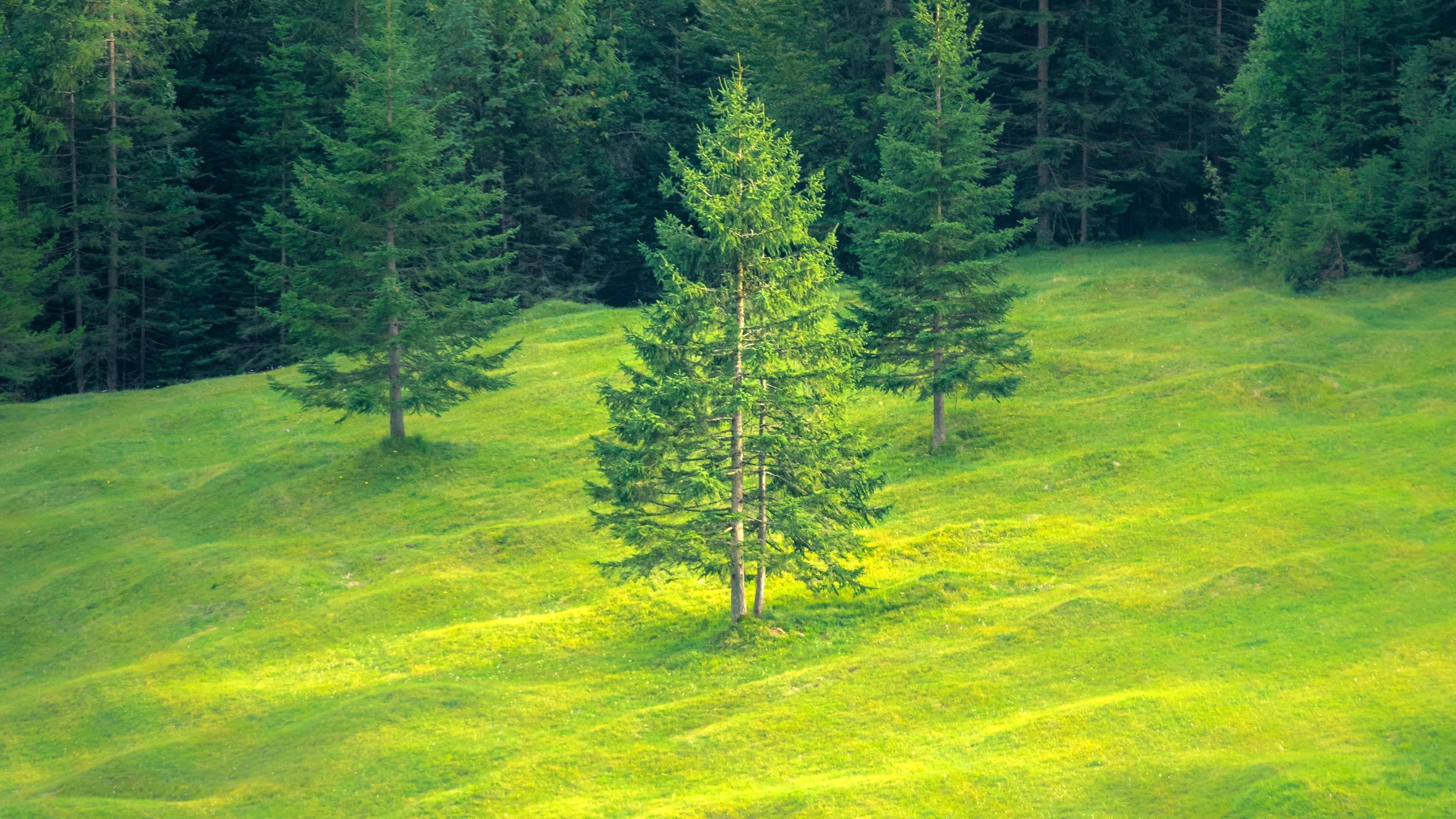 Зеленый ландшафт обои скачать