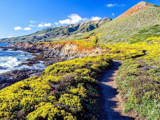 Тропинка между полем желтых цветов и полем зеленой травы пейзажный вид на горы природа океана