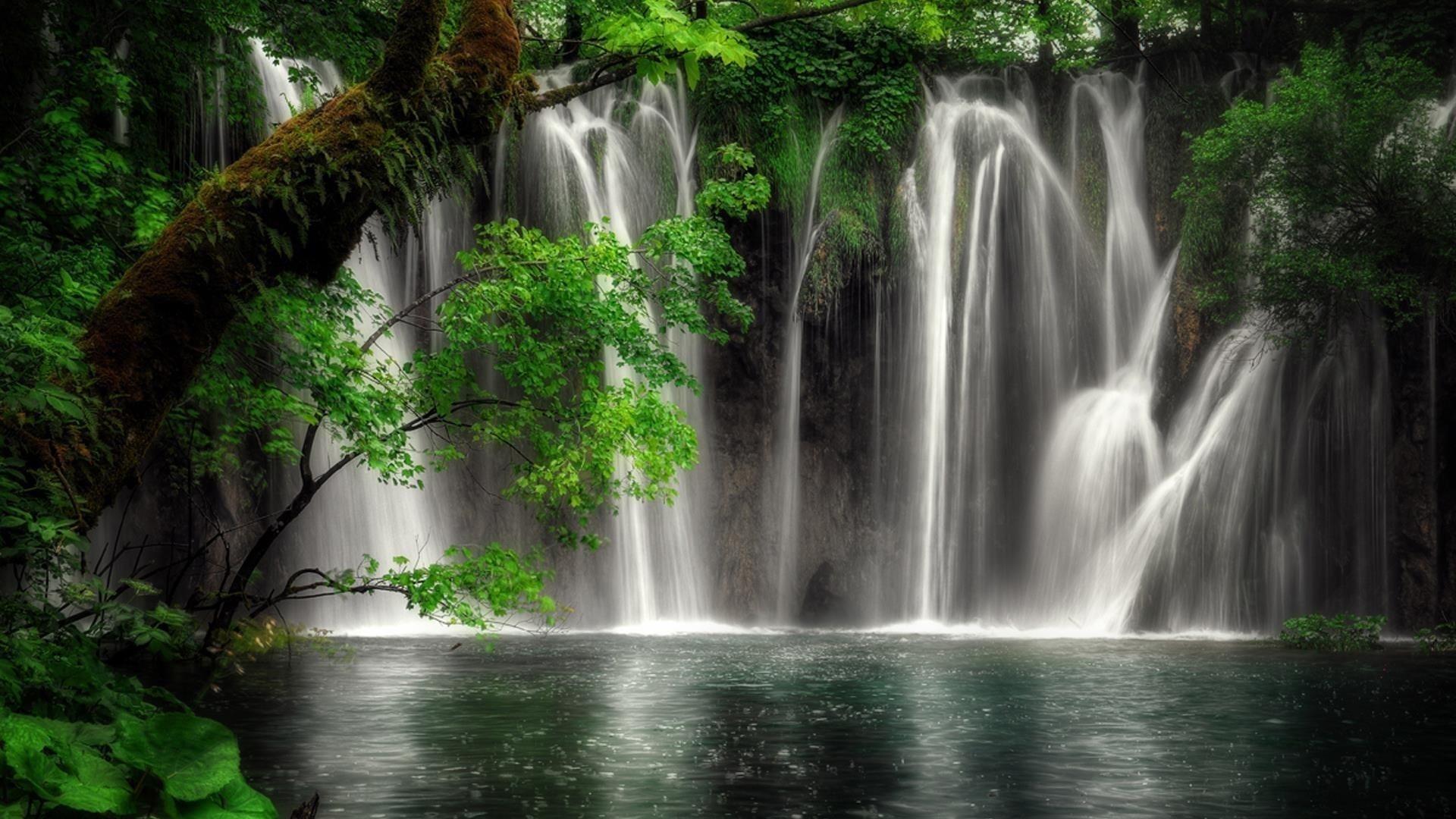 Растительность водопад в лесной природе обои скачать