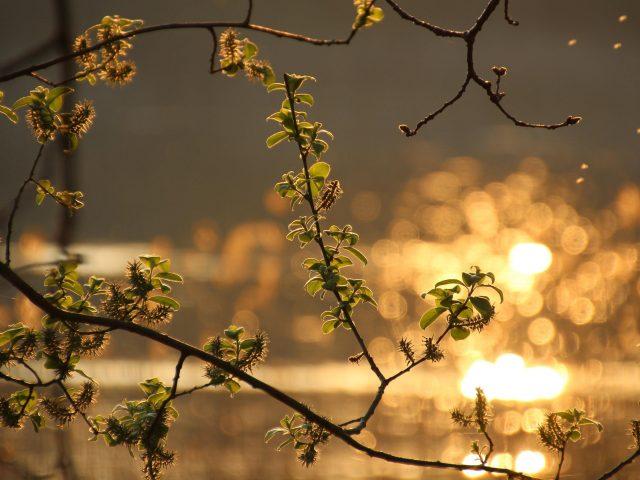 Зеленый лист растения ветка с размытым фоном природа
