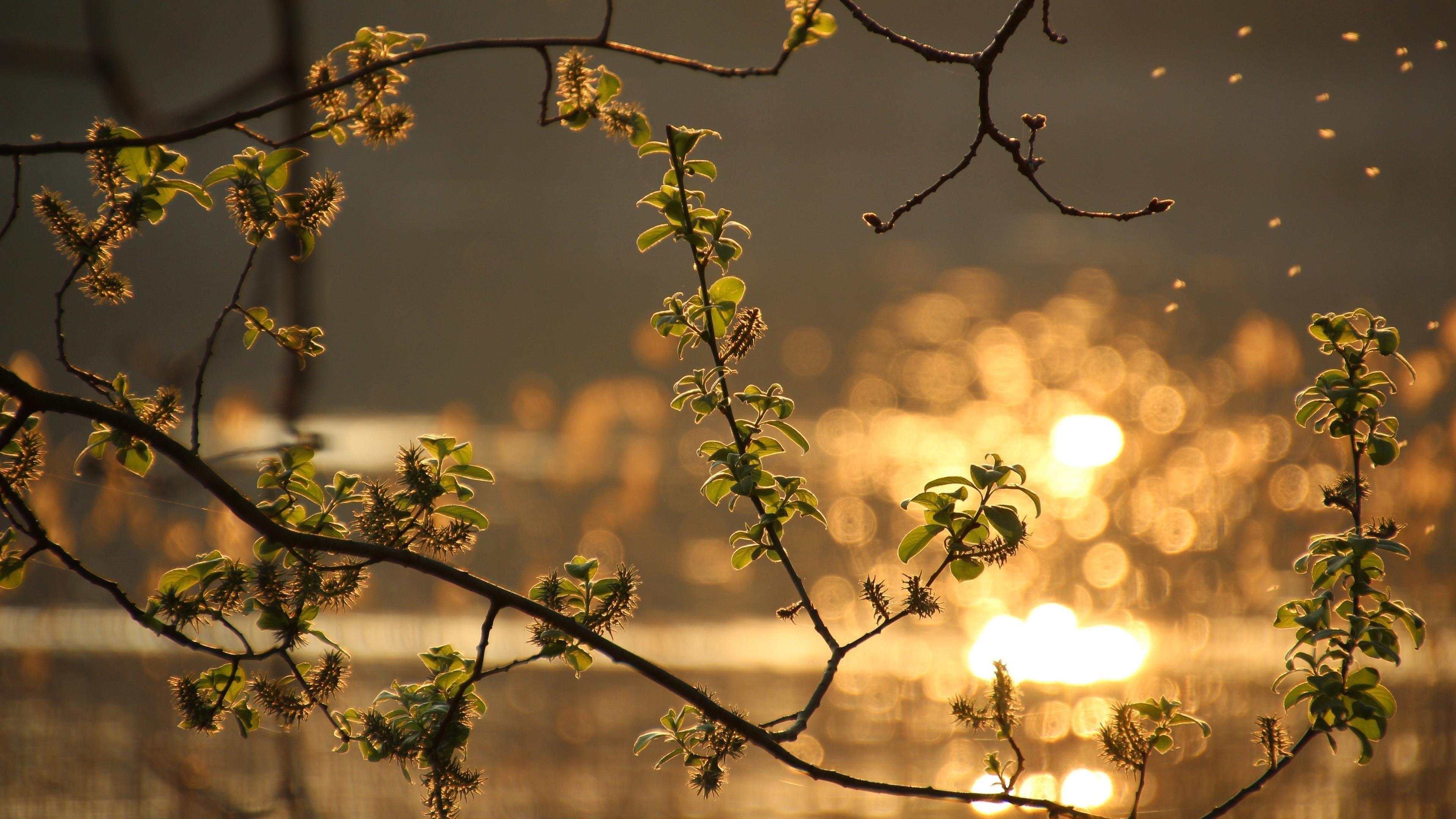 Зеленый лист растения ветка с размытым фоном природа обои скачать