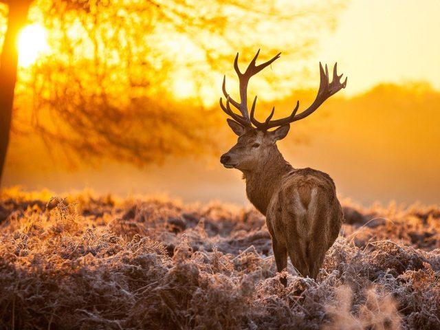 Олень на фоне дерева и восходящих животных
