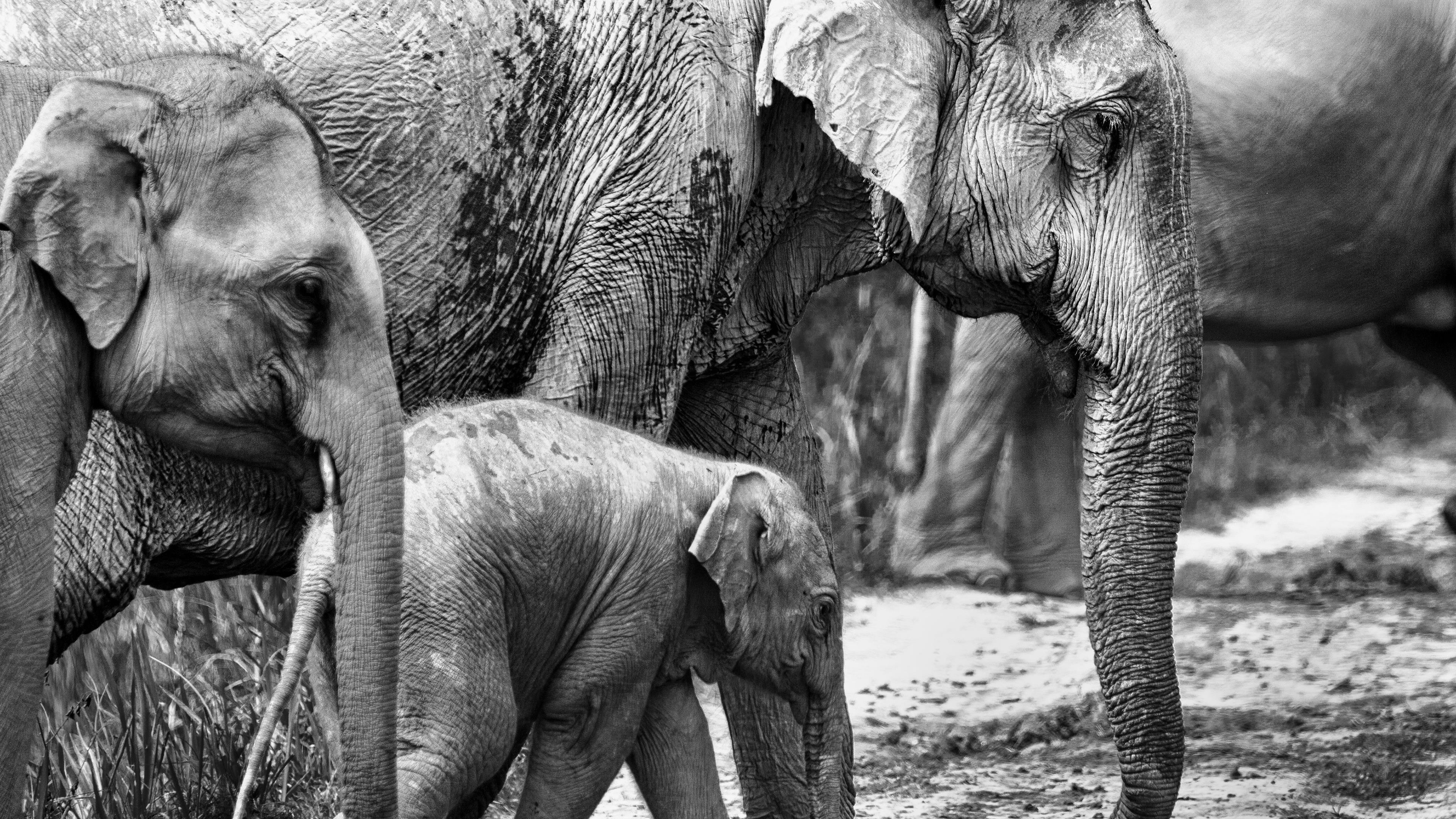 Животное слон обои скачать