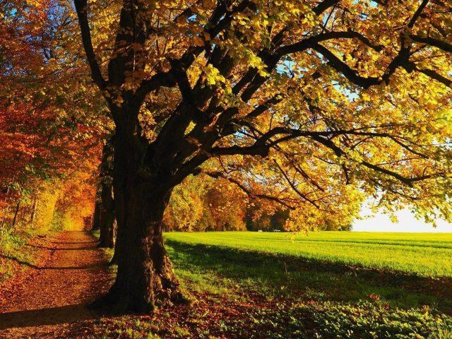 Тропинка между оранжево-зелеными осенне-весенними деревьями и зеленой травой природы поля