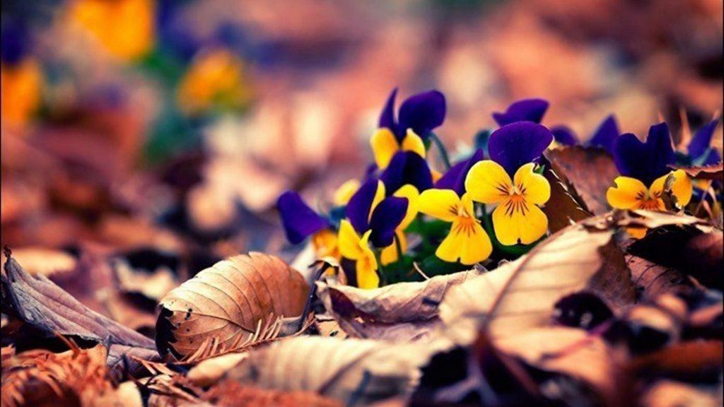 Синие желтые цветы на сухих листьях в размытии сухие листья фон природа обои скачать