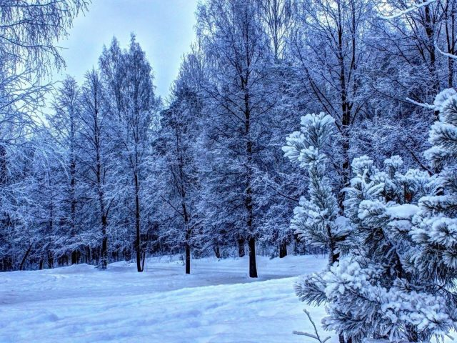 Заснеженные деревья зимнее поле лесной фон зима