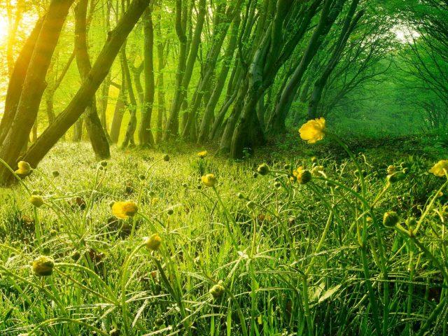 Желтые лепестковые цветы природа лес деревья солнечный свет