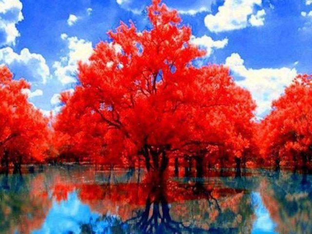 Красные осенние деревья с отражением на озере днем под облачным голубым небом природа