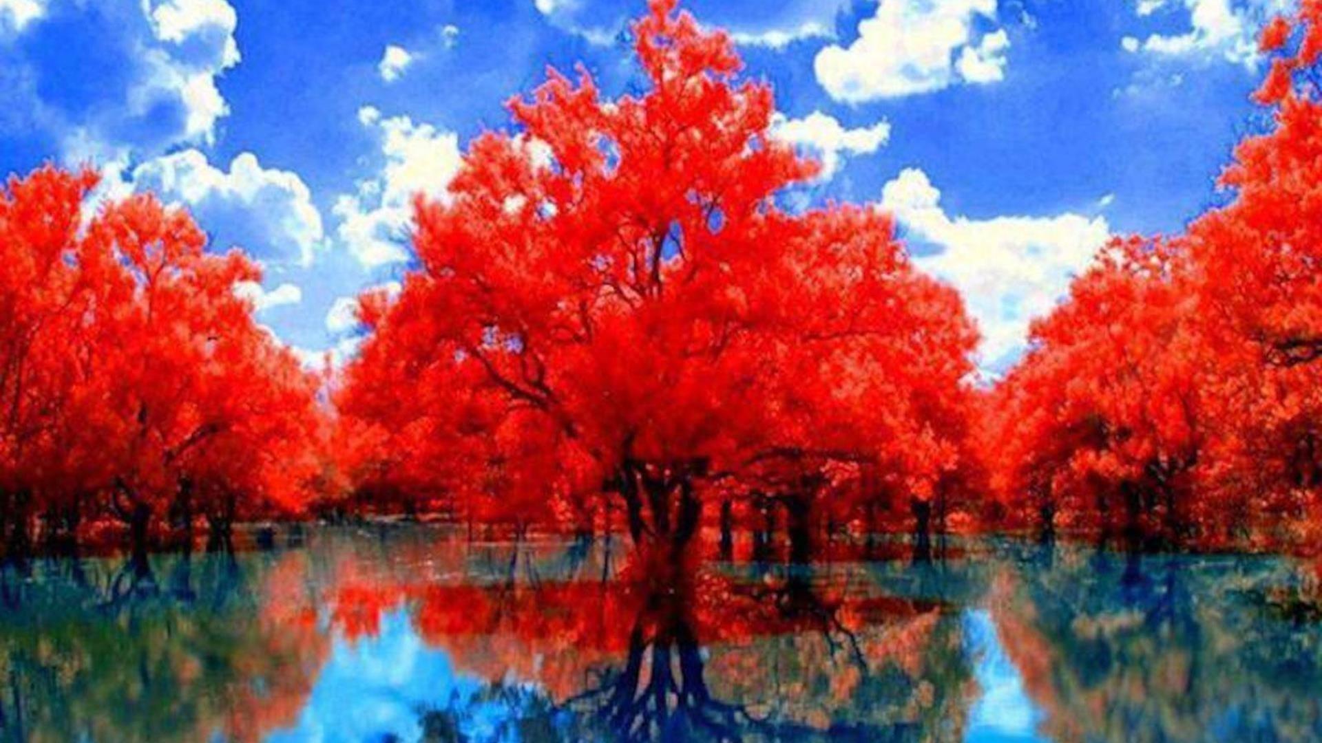 Красные осенние деревья с отражением на озере днем под облачным голубым небом природа обои скачать