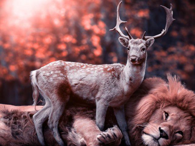 Маленький олень стоит рядом со Львом оленем