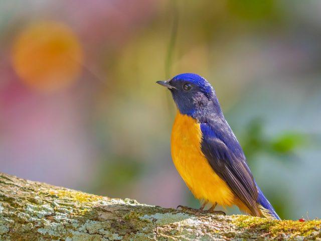 Животные птицы 4 животные