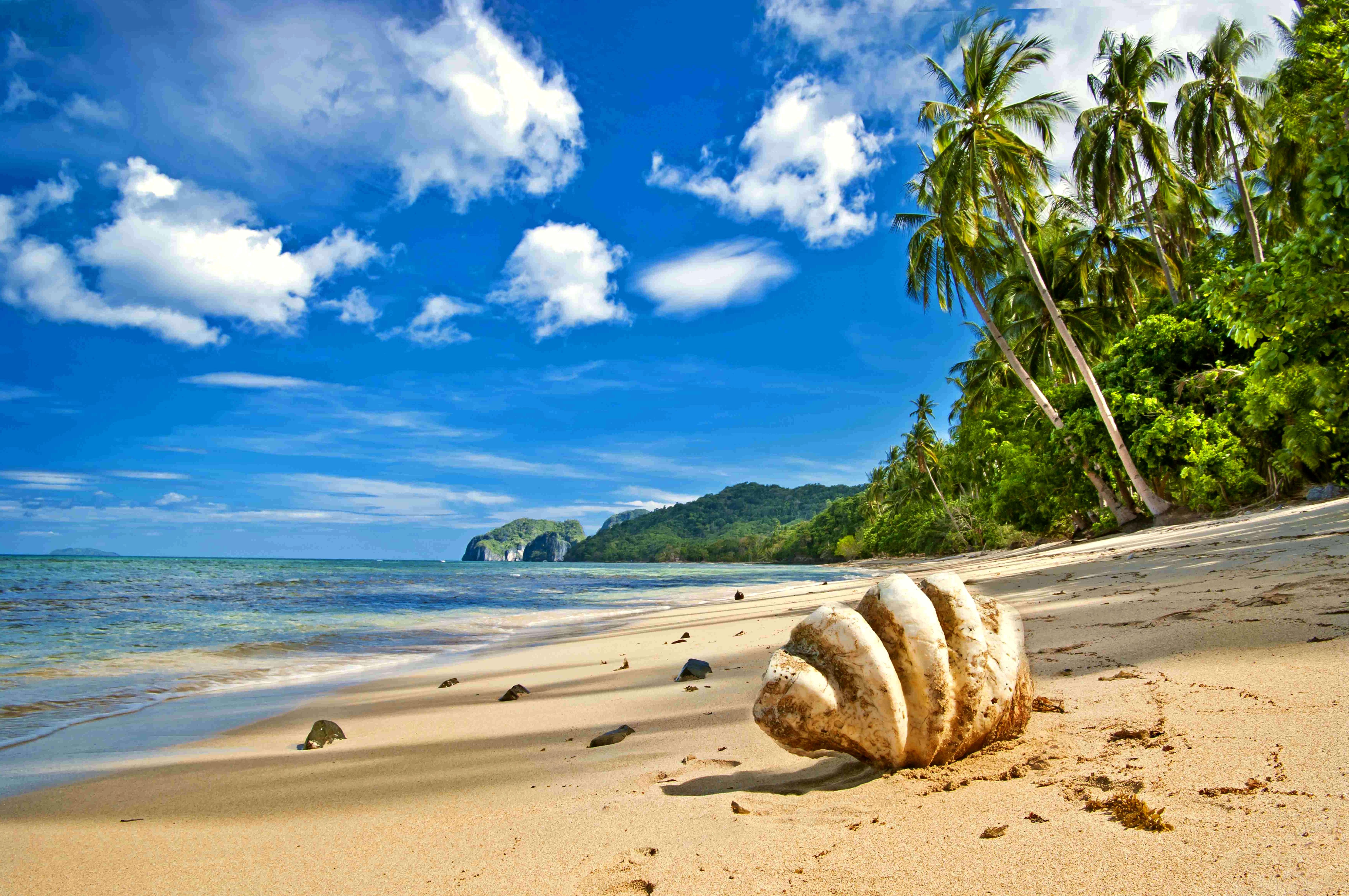 Tropical relax, bed, tree, summer обои скачать