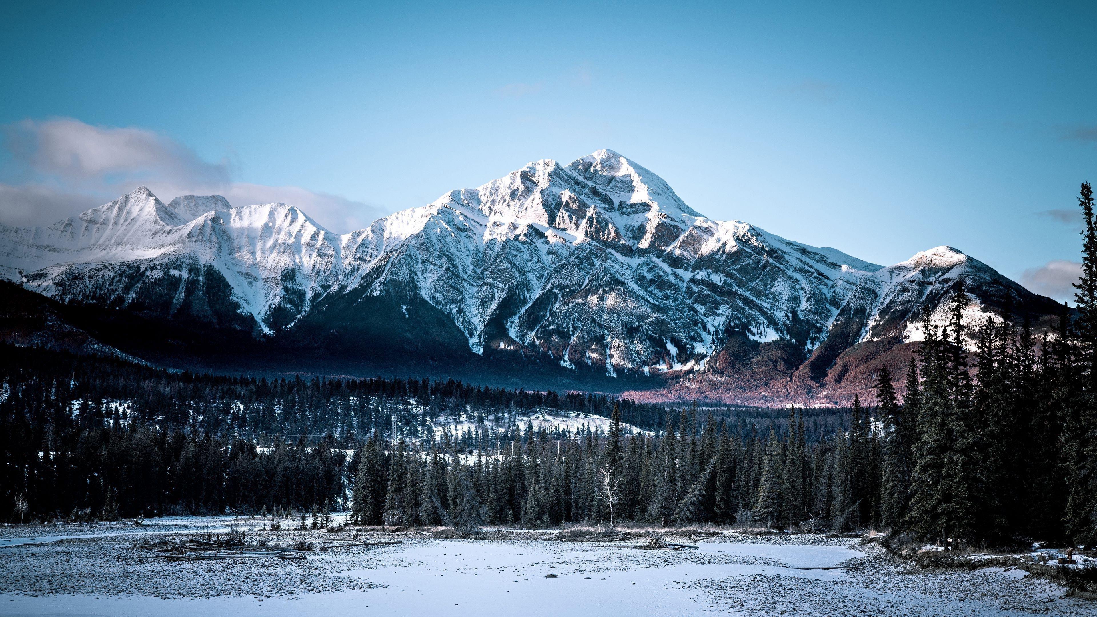 Заснеженная гора под снегом поле между пальмами природа обои скачать