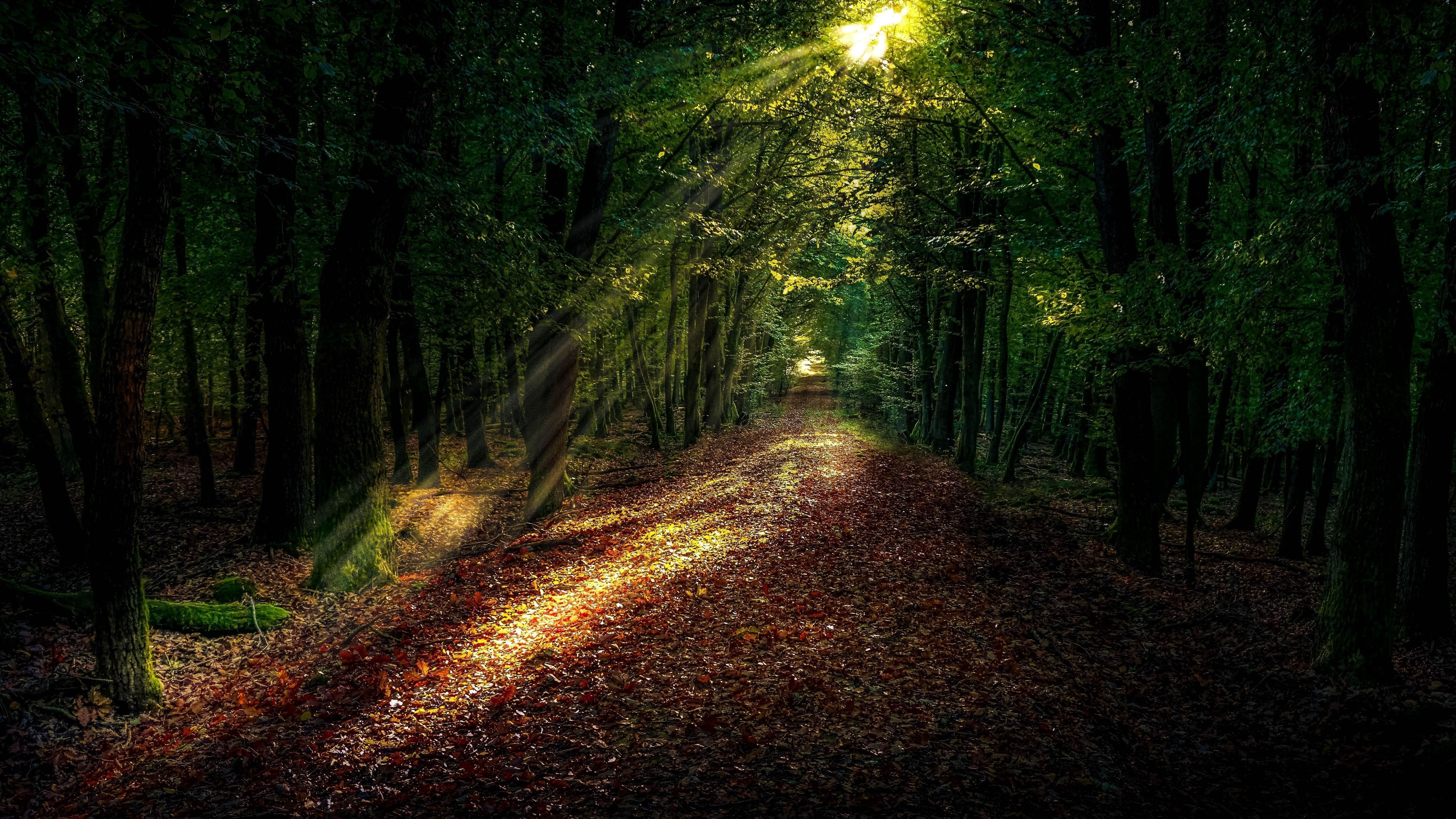 Солнечный свет в темном лесу обои скачать
